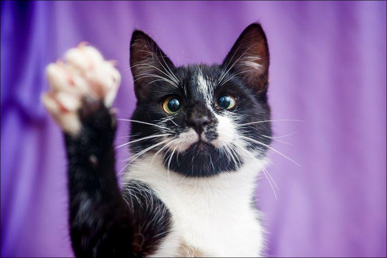 Тишка-плутишка, молодой весёлый котик, в дар