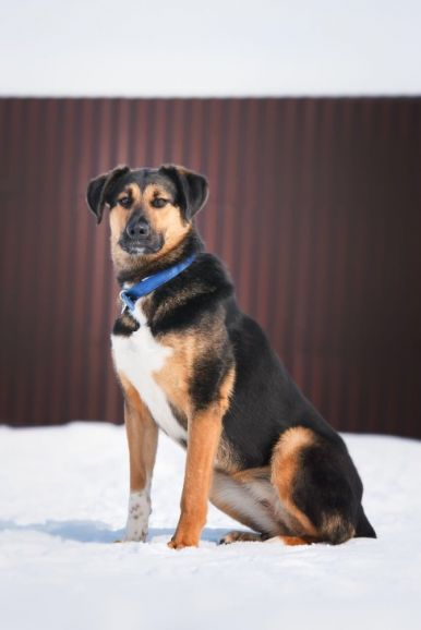 Урфина - собака компаньон ищет дом