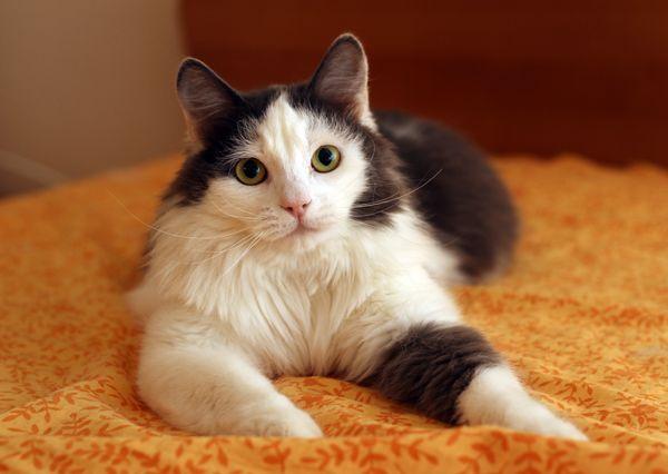 Лёлик - шикарный кот, для истинных ценителей, в добрые руки