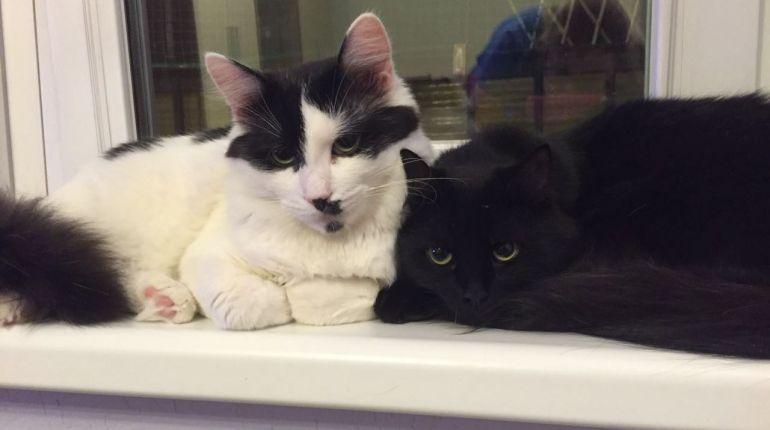 Чёрная кошка и белый кот