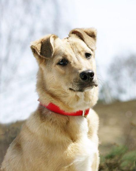 Ищет дом чудесная собачка