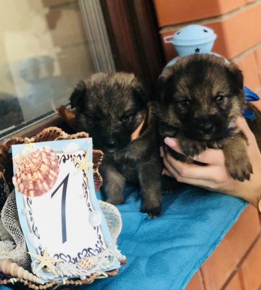 Ищут дом два чудесных щенка мальчика