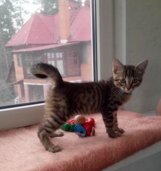 Котёнок Матроскин ищет дом