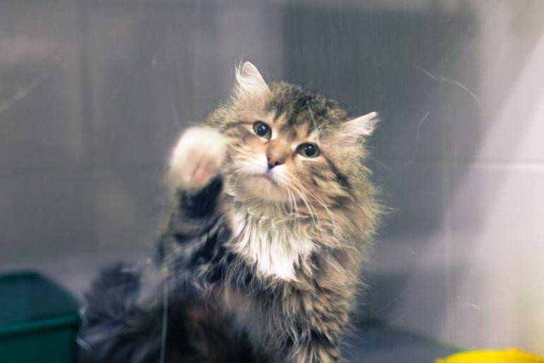 Игрушечный кот Барсик ищет дом