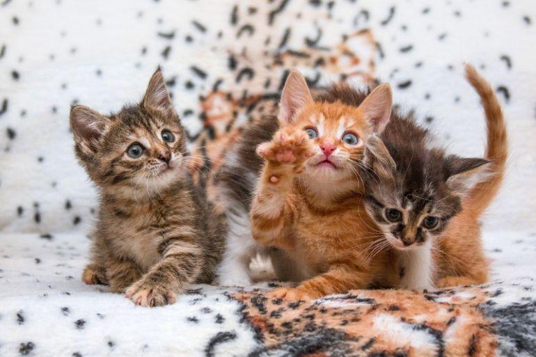 Лучшие котята в самые добрые руки