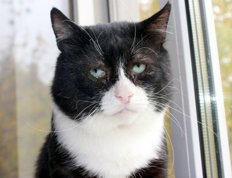 Кот-легенда ищет дом