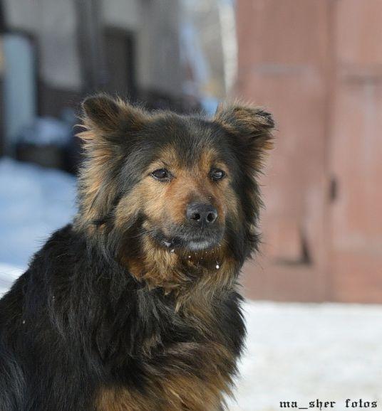 Красивая собака  ищет дом