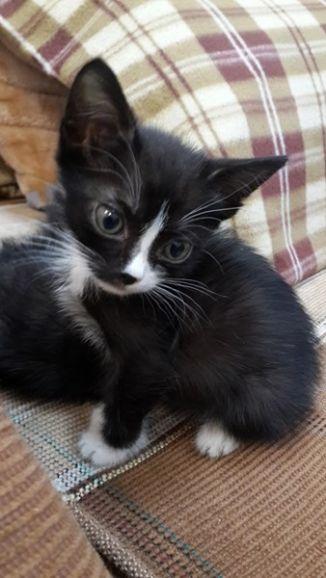 Необыкновенно милый котёнок Пашенька в дар