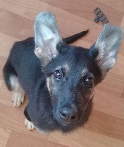 Жизнерадостный щенок (девочка) ищет свою семью