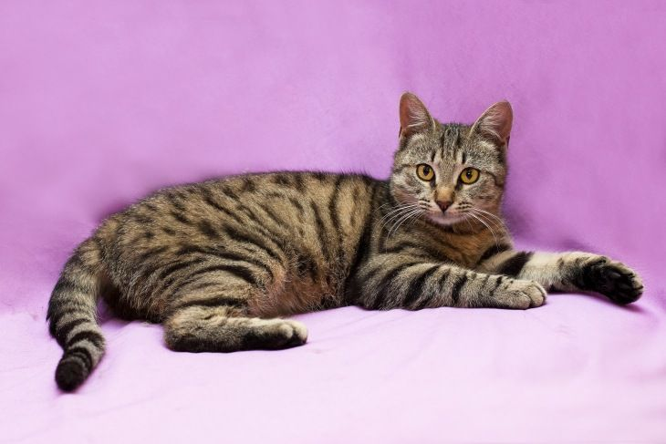 Ищет добрые ручки Амин - идеальный молодой кот