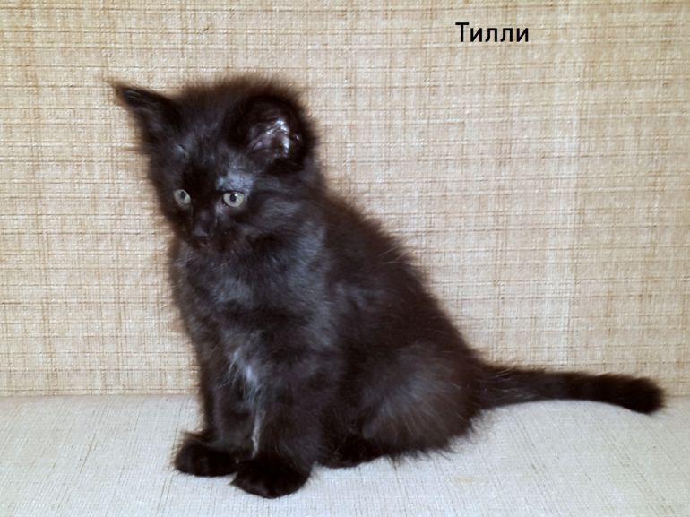 Чёрные котята в поисках дома