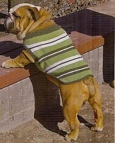 Одежда Для Собак Видео